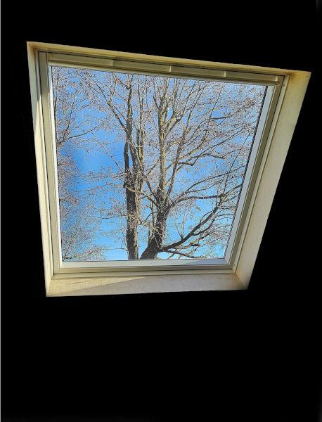 Cat proof Velux window.