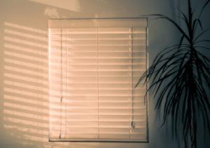 Cat proof Venetian blinds.