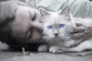 Why do cats bang their forehead on humans?