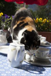 Cat proof tablecloth.
