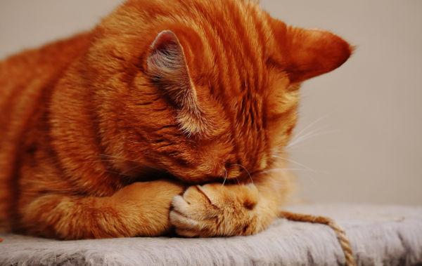 Cat peeing over edge of litter box.