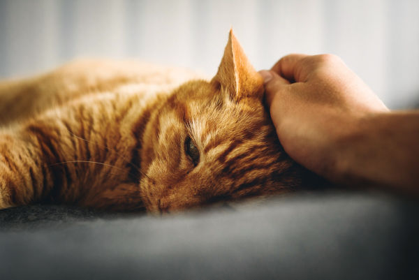 Why do cats want to be near you?
