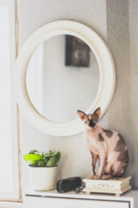 Why can't my cat see himself in a mirror?