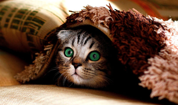 What does it mean when a cat hides and doesn't eat?