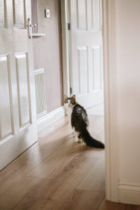 Why does my cat meow outside my bedroom door?