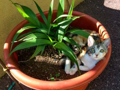 Cat ate plastic plant.