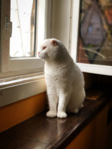 Do cats miss their owner if the owner gives them away?