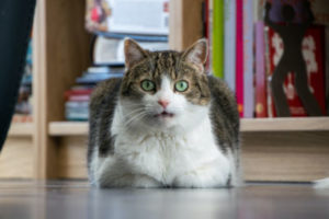 Do cats fart when they are scared?