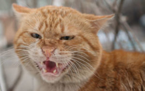 Cat seems to pee out of anger- out of control.