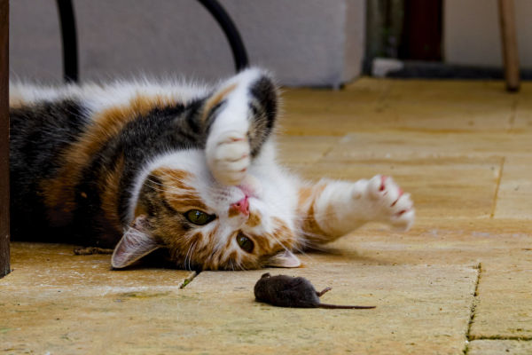 What do you do with injured mice?