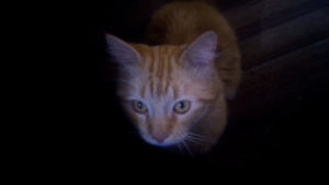 Can I leave my cats in the dark while I go away?
