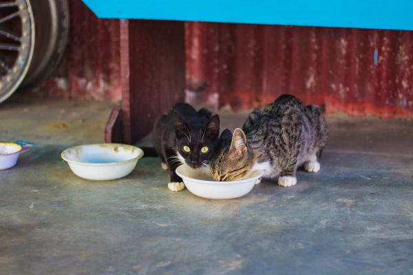 Stop my older cat eating the kitten's food.