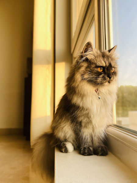 When is it too late to allow an indoor cat outside?