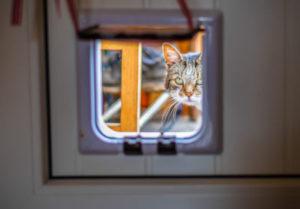 Cat flaps on a fire door?
