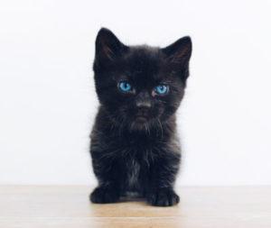 Black kitten changing colour?