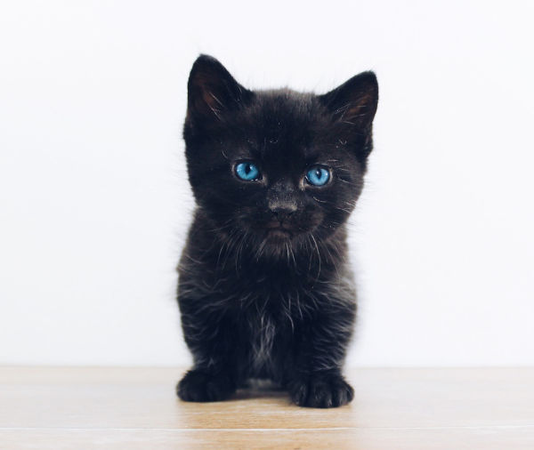 Black kitten changing colour?