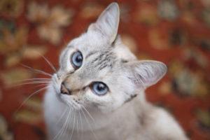 Cats won't eat tapeworm medicine.
