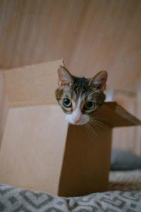 My cat has moved next door.