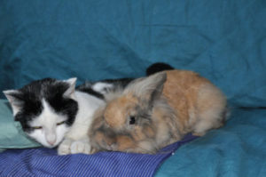 Can rabbits use cat flaps?