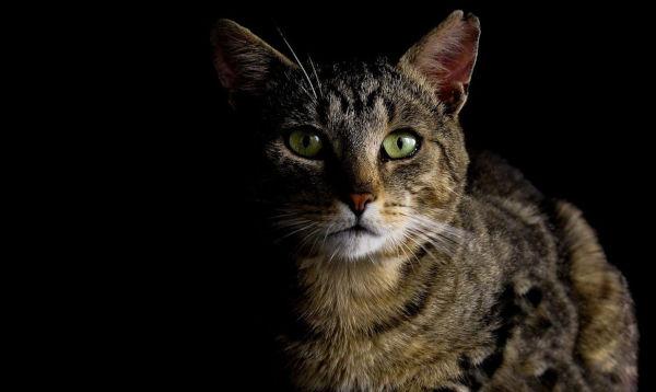 Can cats find litter box in dark?