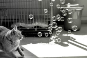 Do your cats like bubbles?