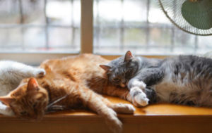 Can a declawed cat and a cat with claws live together?