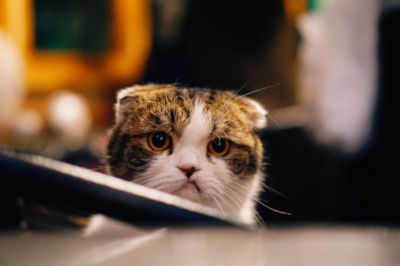 Cat won't wear collar.