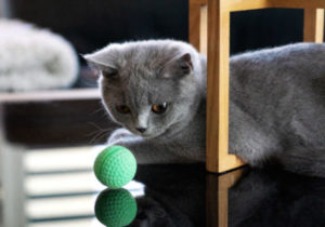 What is normal play between a cat and a kitten?