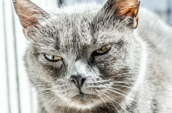 Will a cat hurt a kitten?