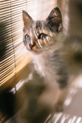 Can I Leave My Kitten Alone with my cat?