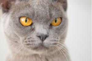 Will my cat kill a new kitten?