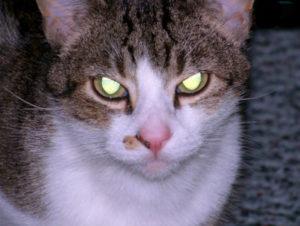 Will a female cat kill a kitten?