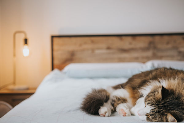 A fluffy calico cat on a bed.