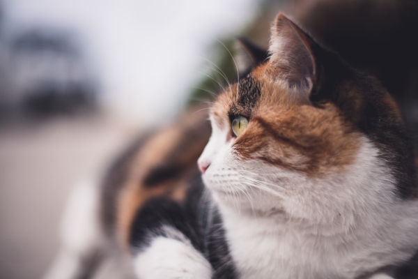 Do calico cats like to cuddle?