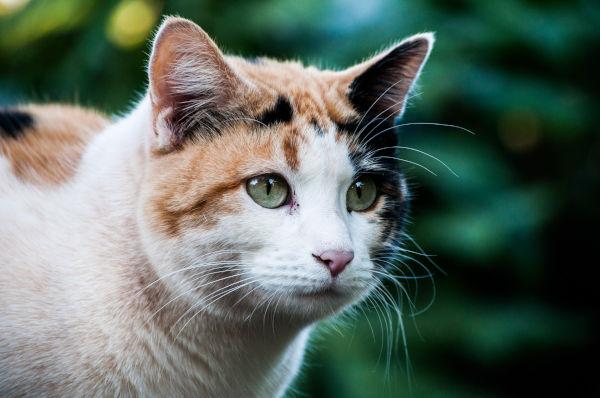 A calico cat.