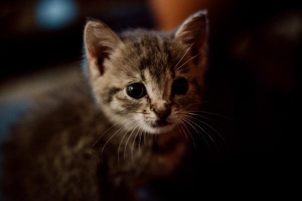 A scared kitten.