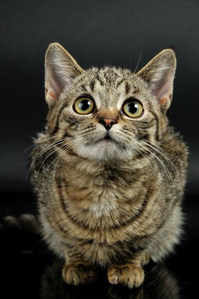 Will a female cat accept a male kitten?