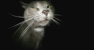 Will neutered male cat hurt kittens?