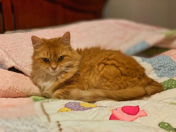 Cat proof quilt?