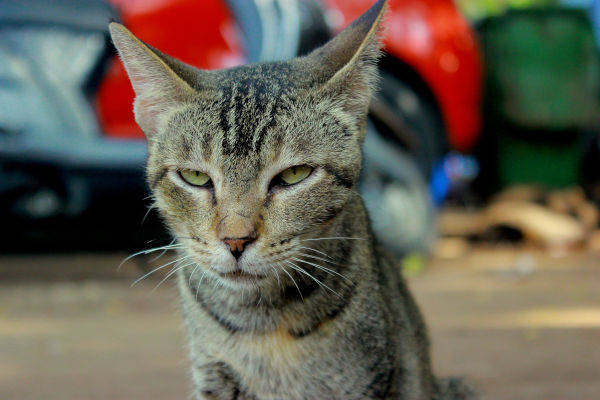 Why does my cat give me dirty looks?