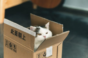 Why does my cat destroy cardboard boxes?