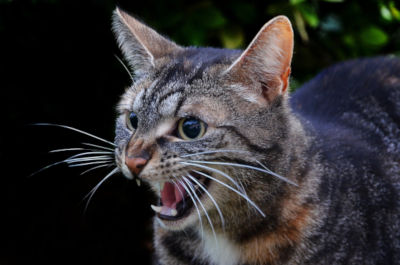 Why does my cat freak out when I breathe heavy?