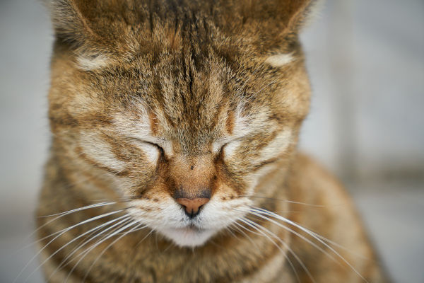 A cat with its eye closed.