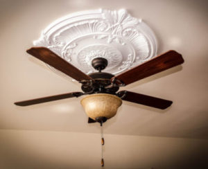 Why is my cat afraid of ceiling fans?