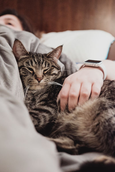 Why is my cat affectionate at night?