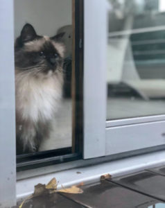Why is my cat afraid to go outside?