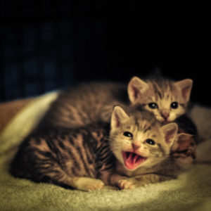 Why does my cat bite and kick her kittens?
