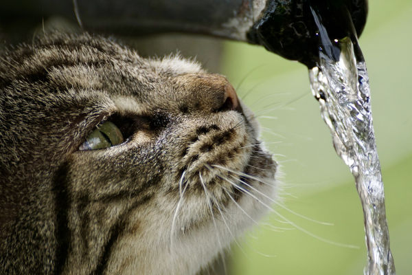 Do cat water fountains use a lot of electricity?
