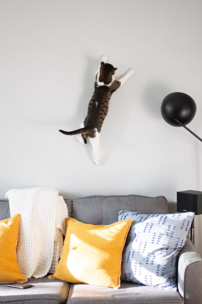 Why is my cat hyper after being neutered?