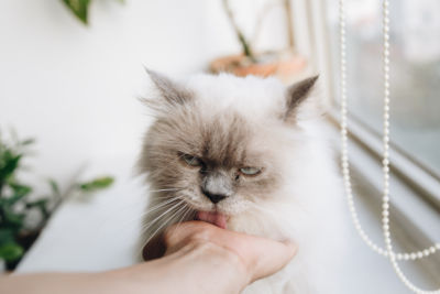 Why does my cat hold my hand and lick it?